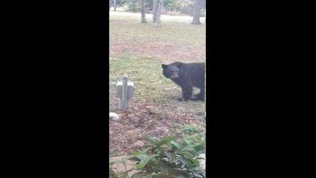 Some patients couldn't believe their eyes when a bear showed up at the eye doctor.