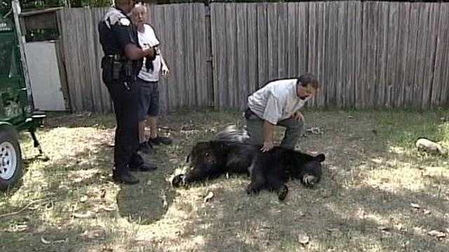 Deputies in Seminole County said a bear was struck by a vehicle early Wednesday.