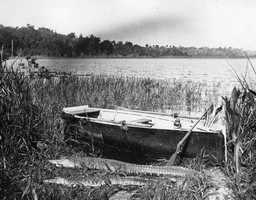 1917: The aftermath of a gator hunt on Lake Apopka.