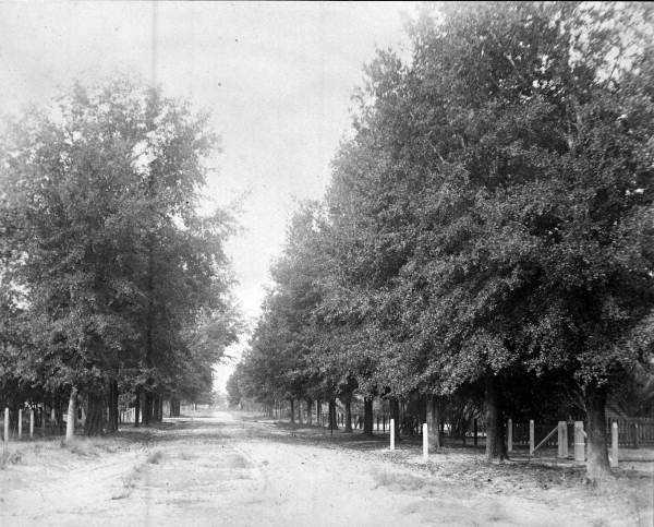 1920: Orange Street, Apopka