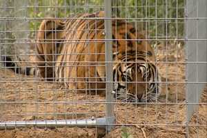 One hundred thirty eight exotic animals have a new home outside of Ocala. The animals had to be removed from their previous location in Zolfo Springs. They now live near the Ocala National Forest.