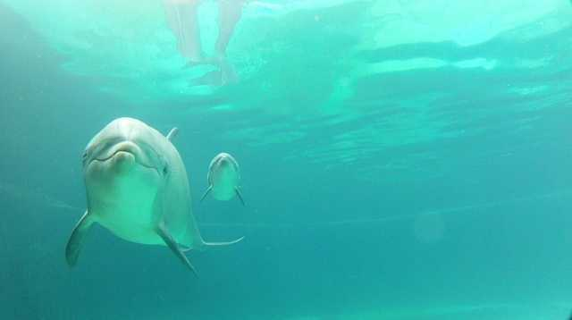 Discovery Cove theme park is celebrating the birth of a male Atlantic bottlenose dolphin.
