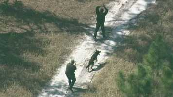 A man was tracked by a K9 into the woods in Deltona as deputies responded to reports of a fleeing driver Friday morning.