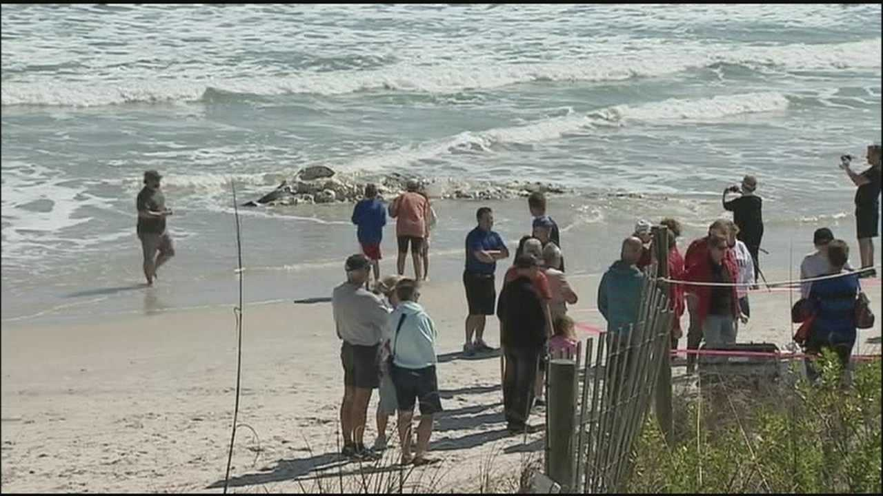 Humpback whale, dolphin wash up at New Smyrna Beach