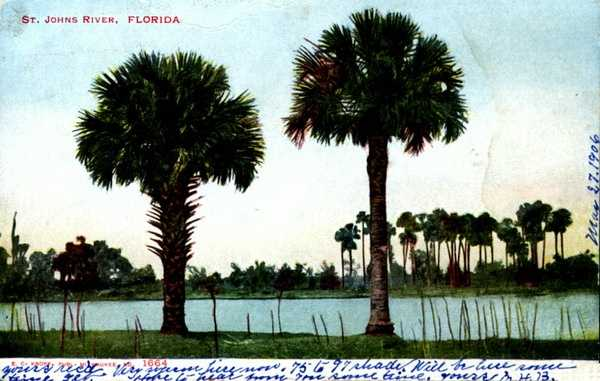 The St. Johns River is shown in this postcard dated 1906.