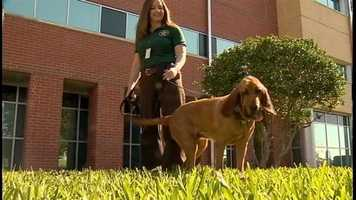 A special birthday was celebrated on Friday at the Seminole County Sheriff's Office.