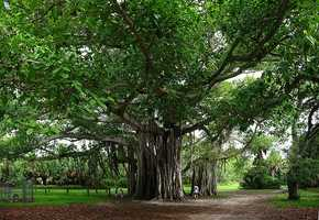 Hugh Taylor Birch State Park (Fort Lauderdale) - 2012