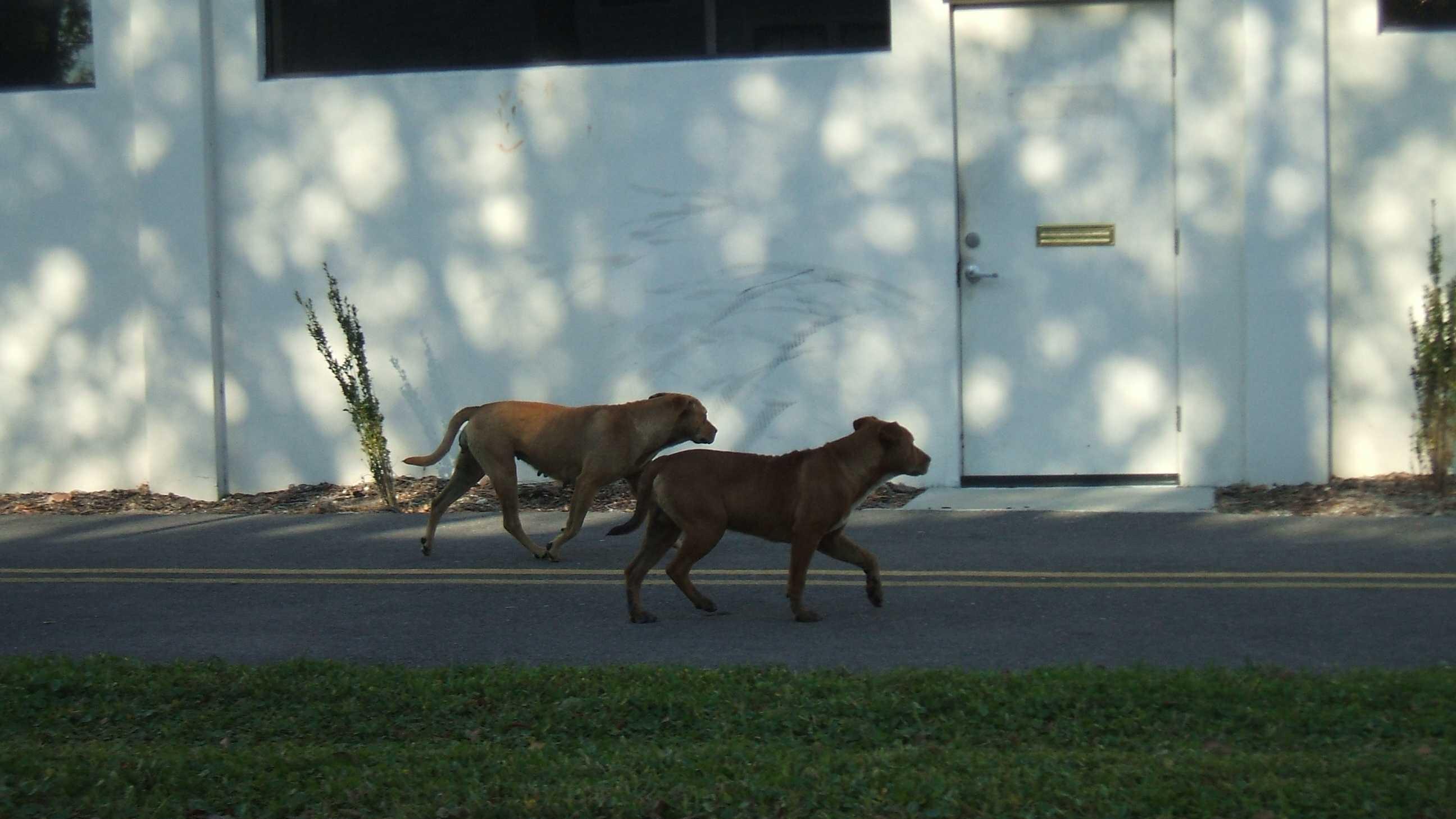 Volusia dogs 2