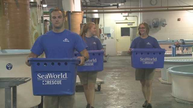 SeaWorld released 14 seas turtles in the water along Brevard County on Wednesday.