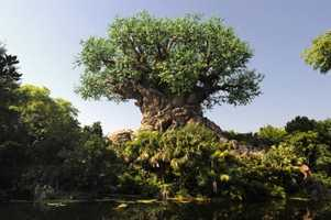 The park originally opened in 1998 to feature several lands dedicated to exploring wildlife and wild places – Africa, Discovery Island, Oasis, Camp Minnie-Mickey, Rafiki's Planet Watch, and DinoLand, U.S.A.