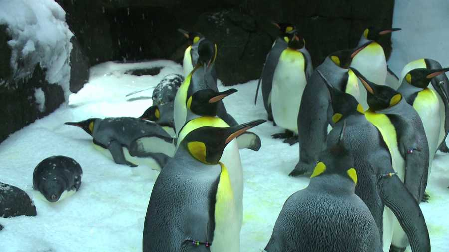 You can also meet real penguins.