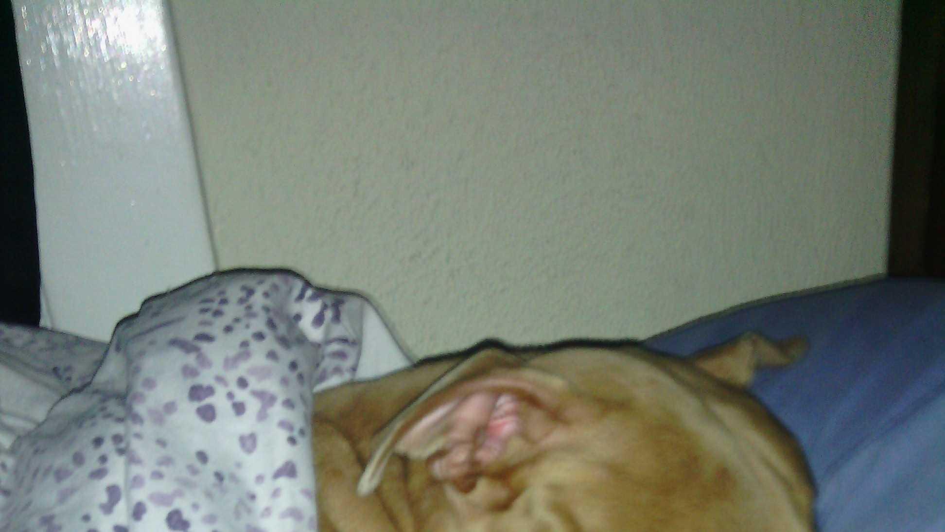 Orange deputy shoots dog, owner cries foul