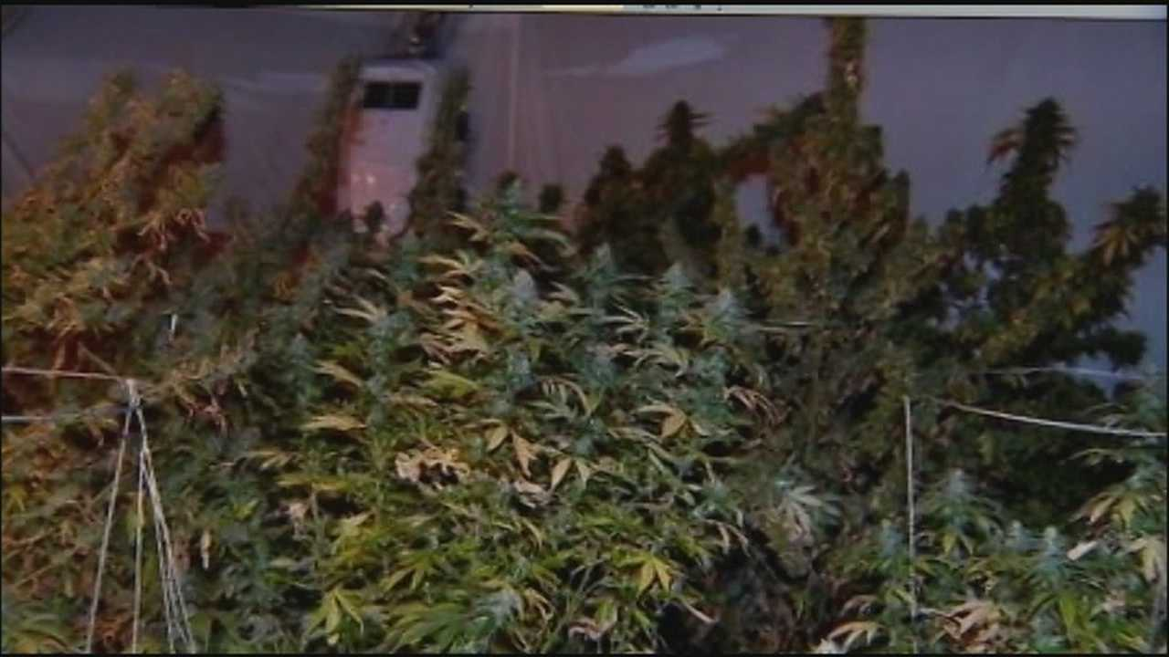 Daytona Beach Police Department officers say they weren't surprised to find a pot-growing operation inside a home.
