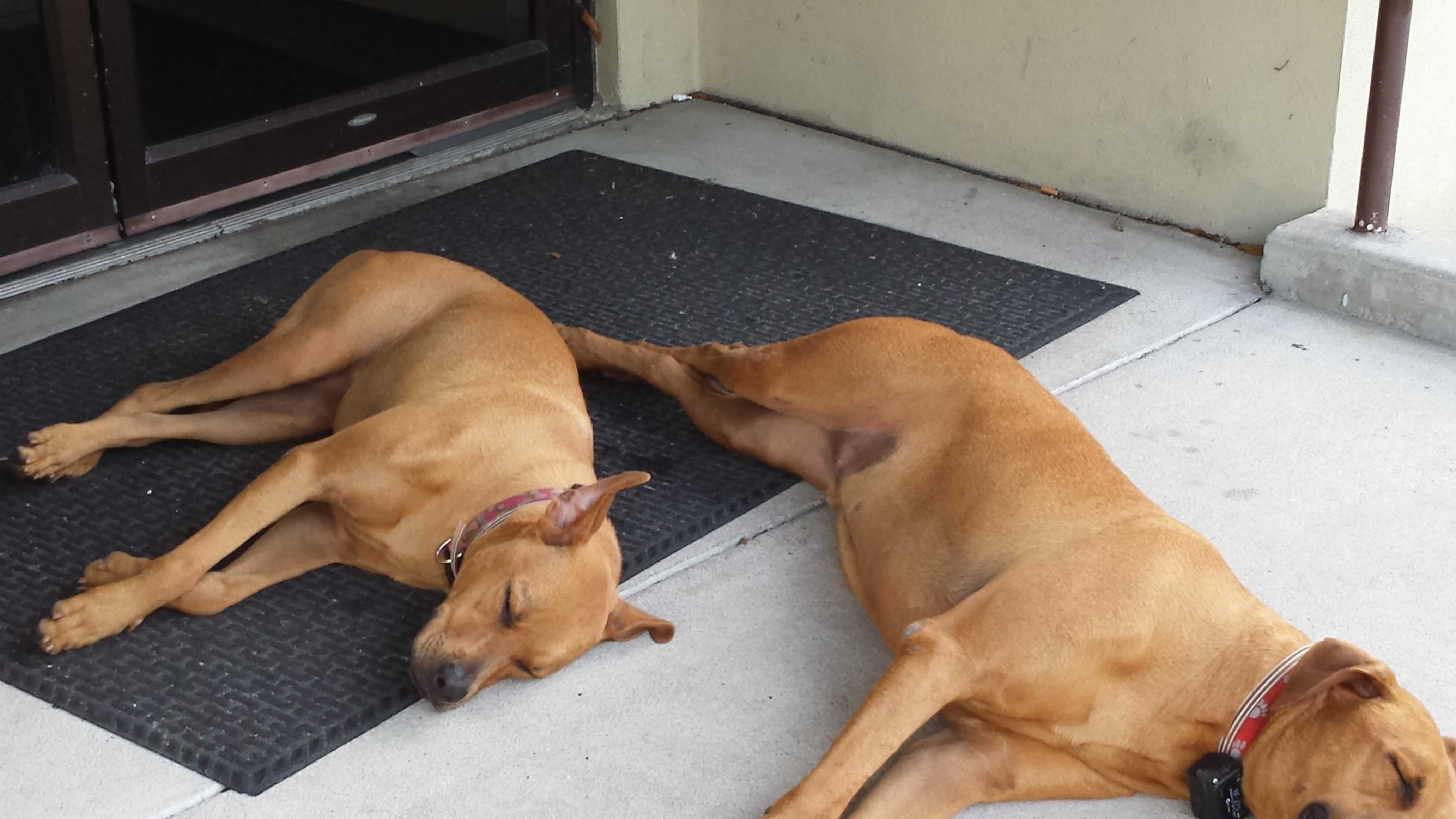 dogs come to FHP station 2