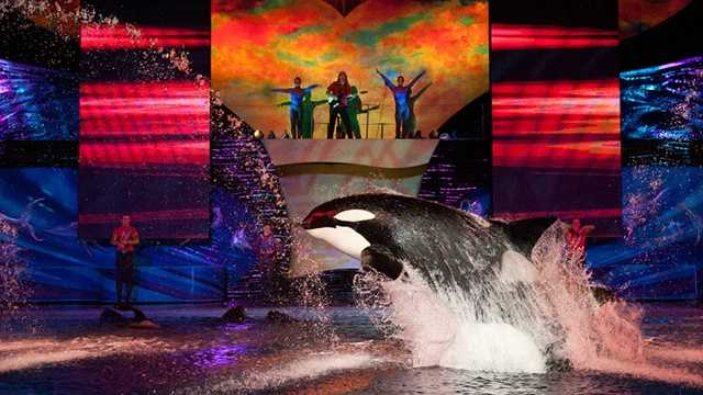 Summer Nights at SeaWorld: Summer has begun and now SeaWorld will stay open until 10 p.m. with special nightly events, including Shamu Rocks, and all of the park's thrilling attractions.
