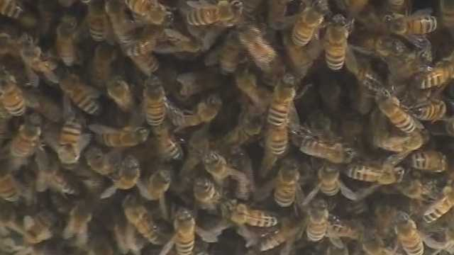 A growing beehive has a neighborhood abuzz in Port Orange. Neighbors said they can't enjoy their backyards because of the stinging bees.