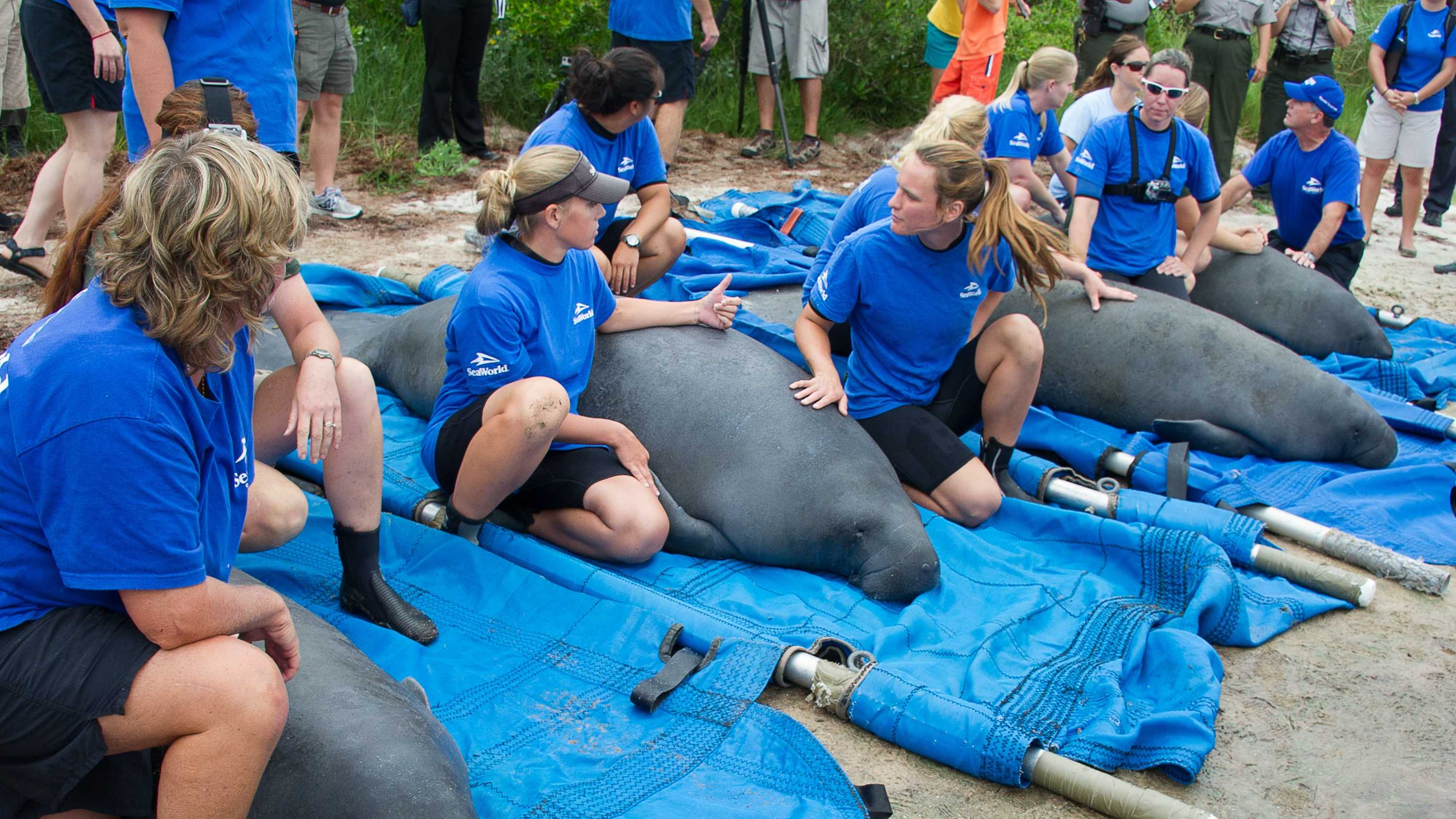 20130718_Four Manatee Release_33