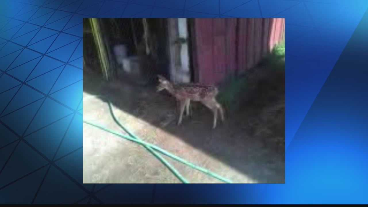 The Department of Natural Resources says it's gotten death threats after a WISN 12 News investigation about a baby deer's death.