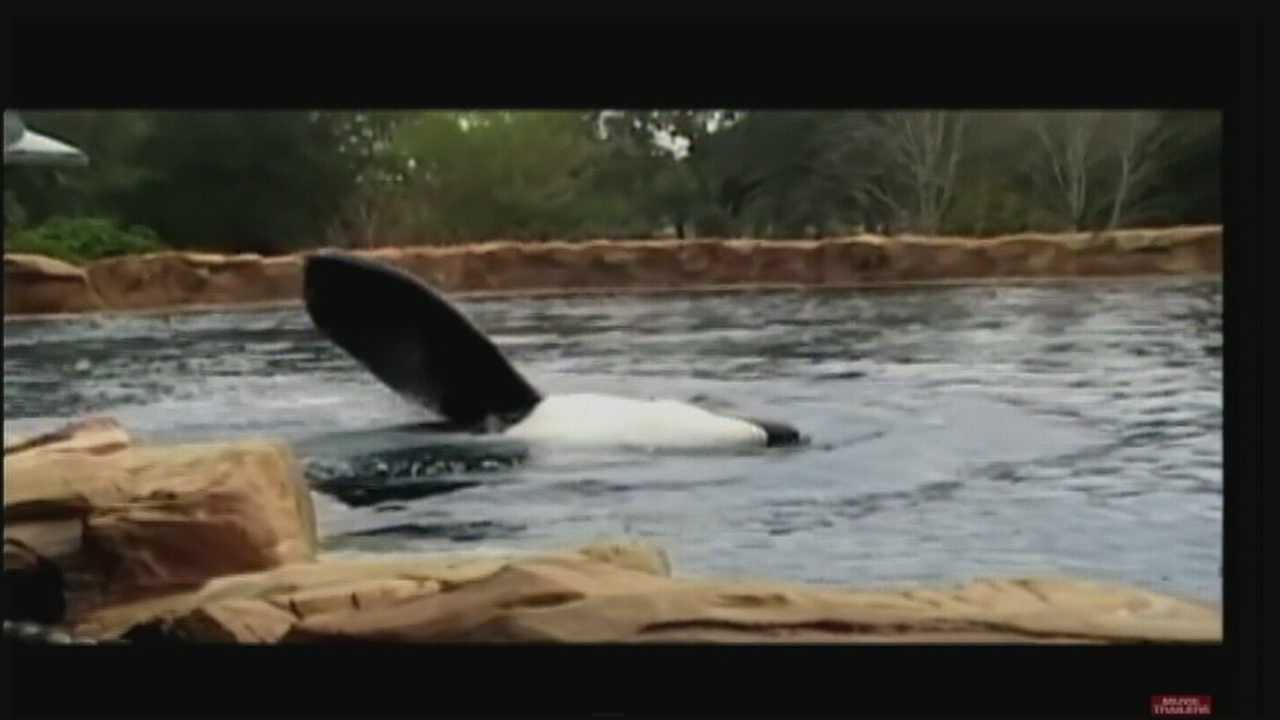 Documentary about Tilikum, death of SeaWorld trainer opens