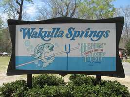 Pole-vaulting fish in Wakulla Springs: Guests can take a 40 to 60 minute glass bottom boat ride on Wakulla Springs and if they are lucky Henry-the-Pole-Vaulting-Fish may choose to entertain upon request of the captain.
