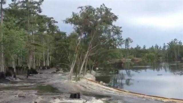 A sinkhole swallowing trees in Louisana was caught on camera.