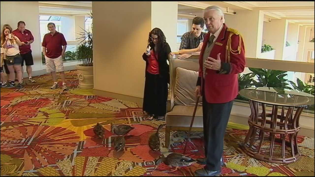 Fans flock to the Peabody Hotel in Orlando for the final duck march before the building is sold.
