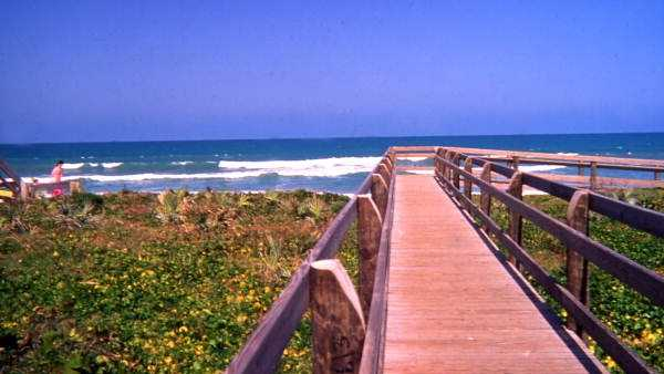 A frontal view of the boardwalk at the Canaveral National Seashore beach.