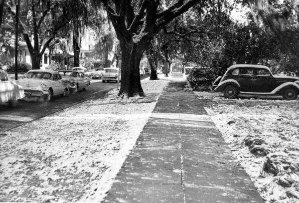 Snow on the ground in a neighborhood in Tallahassee. Photograph taken in 1958.