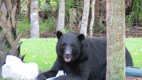 Lake Mary bear2.JPG