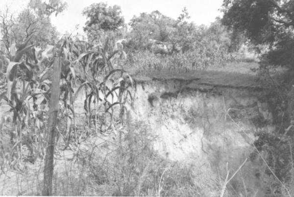 A view of a sinkhole in a corn field in 1963.