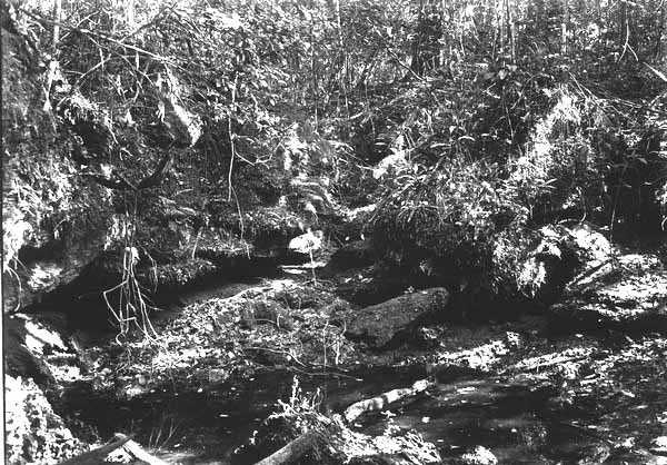 Ferns growing on shelving rocks in a limestone sinkhole in 1918.