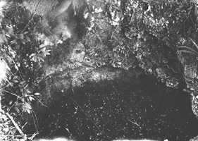 A limestone sinkhole with many small plants in 1916.