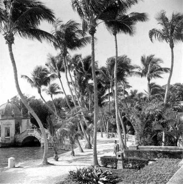 Palm trees near the waterfront shore of the mansion.