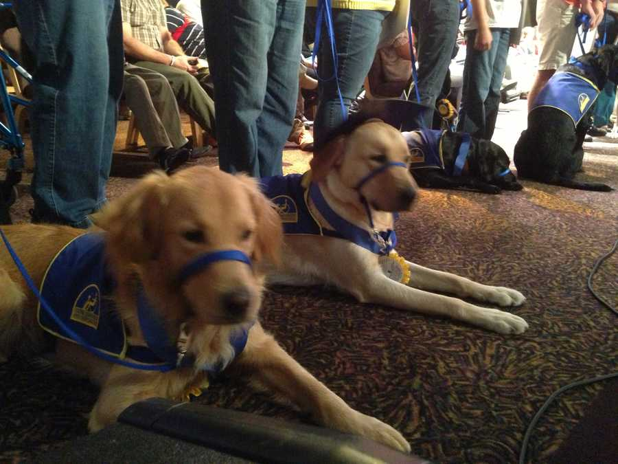 It's a big day for Canine Companions for Independence. On Friday afternoon, puppies are graduating to more advanced training and graduates are going home with partners.