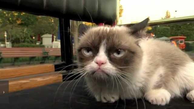 Grumpy Cat.jpg