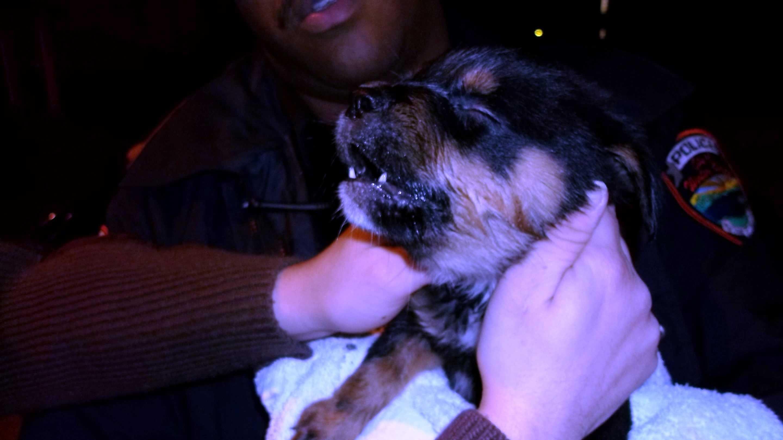 Winter Haven Puppy 3