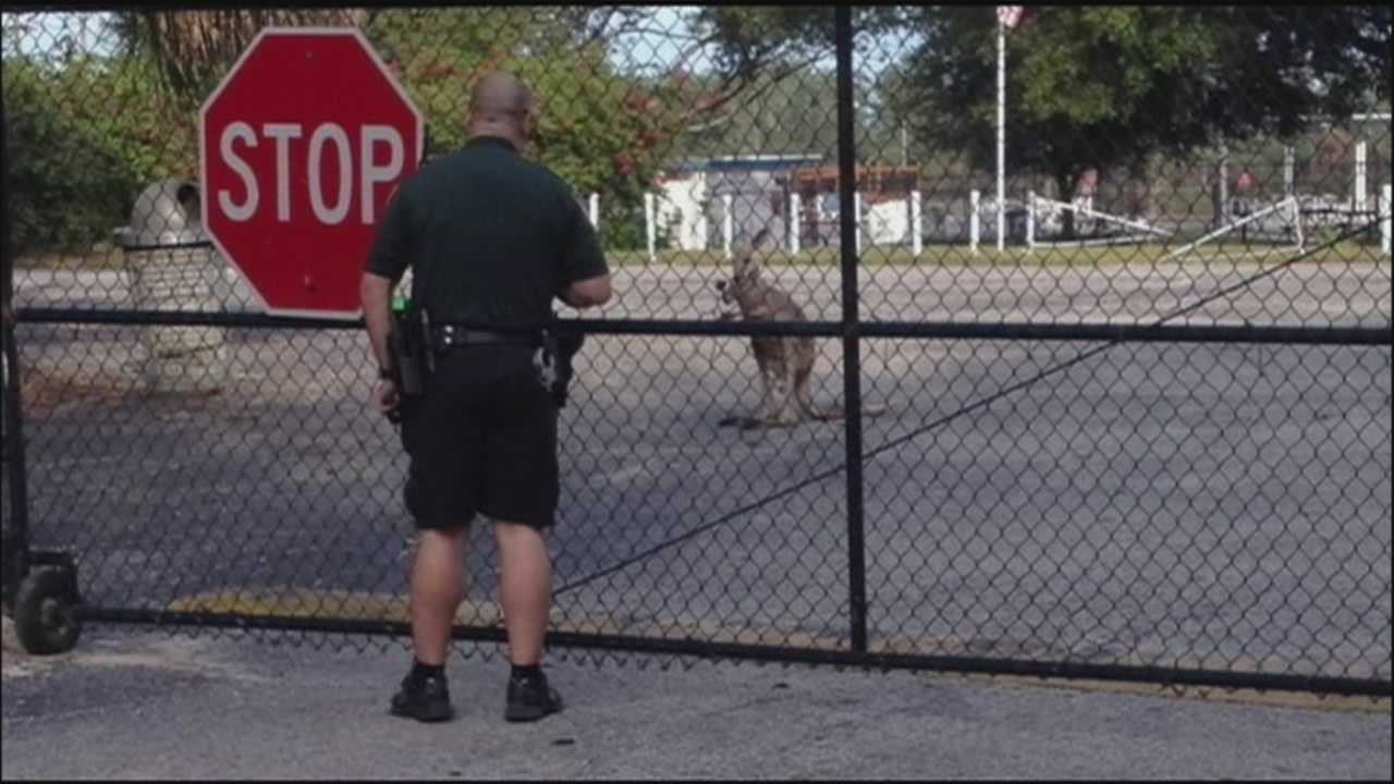A small kangaroo is back with its sitter after getting loose in an Orlando neighborhood on Tuesday.