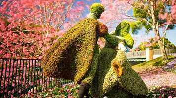 3. The International Flower & Garden Festival will be sprouting at Epcot from March 5-May 18. There will be flower displays, interactive play areas, and appearances by Kermit the Frog and Miss Piggy.