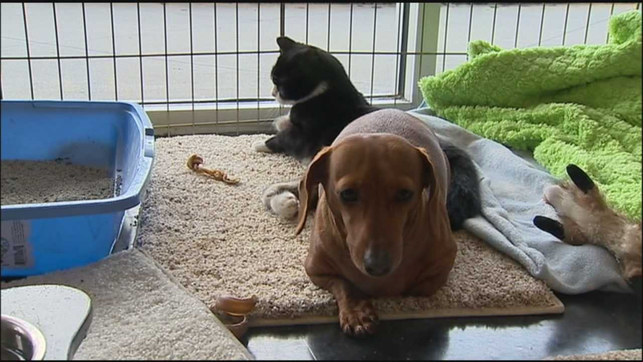 After being found dumped by the side of the road together, a dog and a cat have a strong bond.