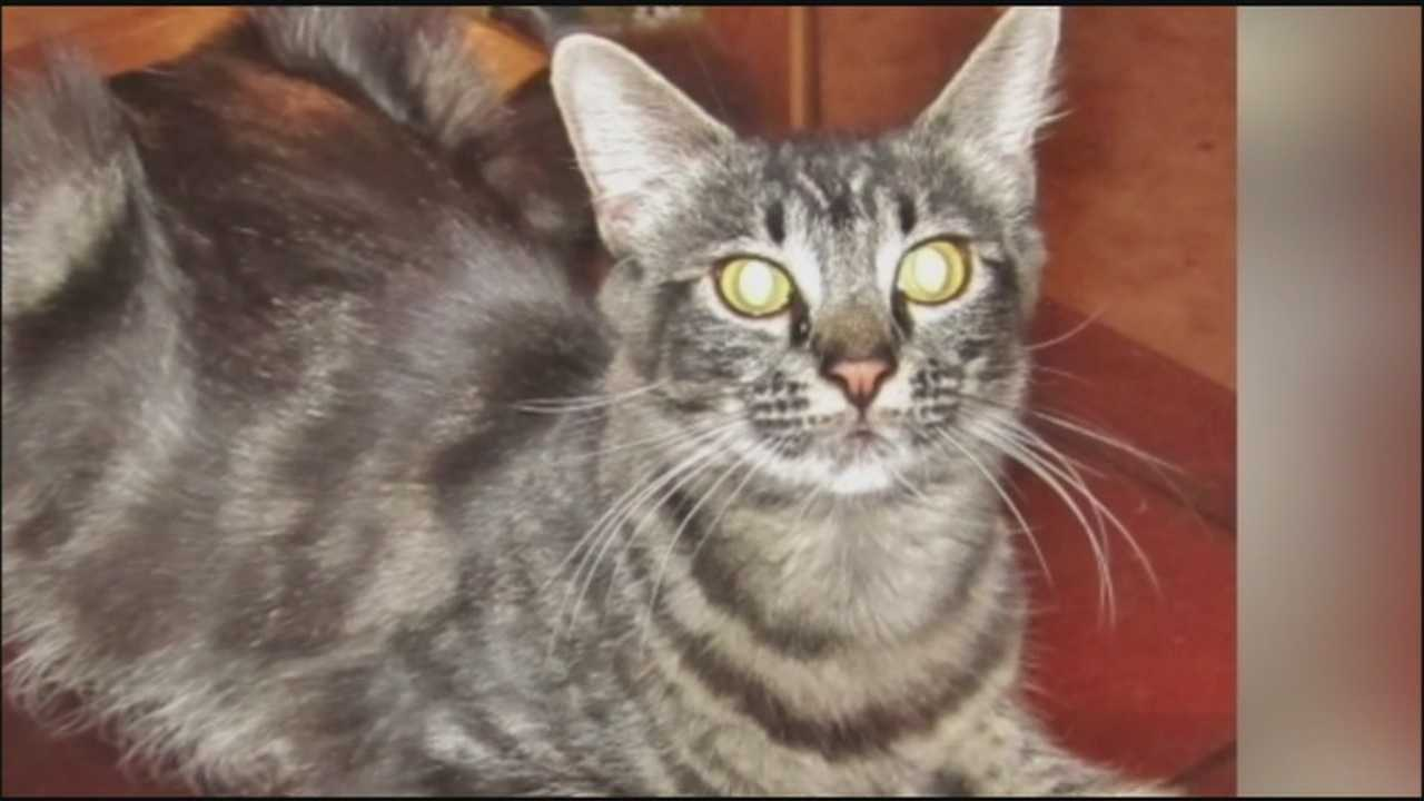 A local woman is working to find homes for 16 cats that her brother owned before his death.