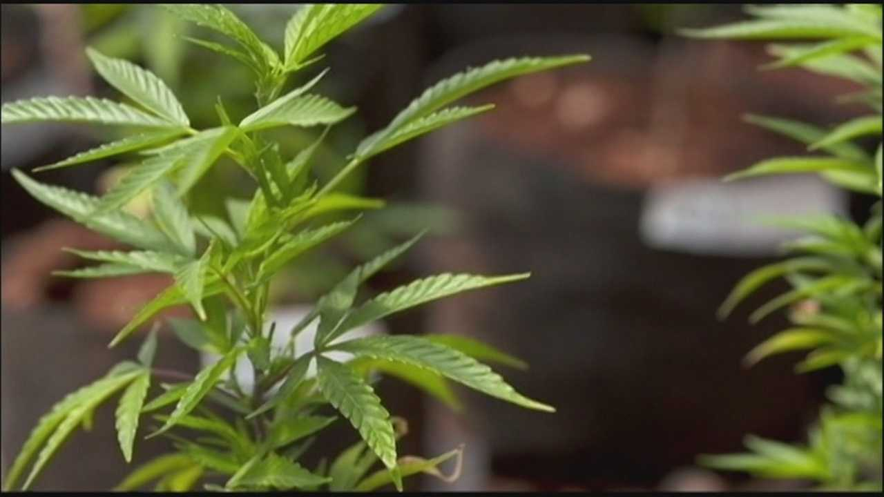 Florida's medical marijuana vote: What you need to know