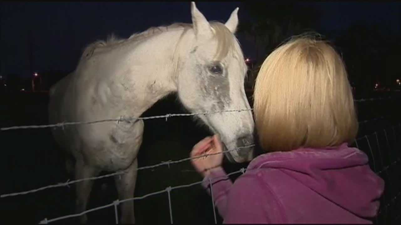 Residents contacted WESH 2 News after spotting a starving horse at the corner of Conway Road and Judge Road near Belle Isle.