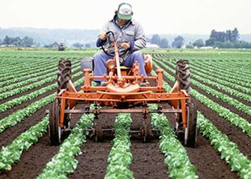 13. Farmworkers and Laborers, Crop, Nursery, and Greenhouse - $19,960