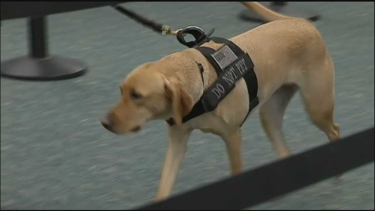Bomb-sniffing dogs will soon be part of the security screening process at Orlando International Airport, where TSA officials say they will speed up security checks.