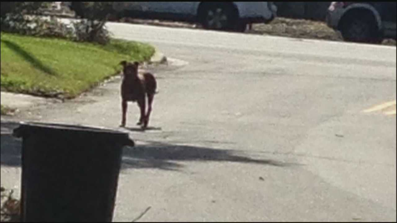 Residents in one Orlando neighborhood say a group of pit bulls are terrorizing them.