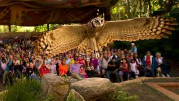 27. Flights of Wonder: Learn about exotic birds while relaxing under a canvas canopy.Location: AsiaDuration: 25 minutes