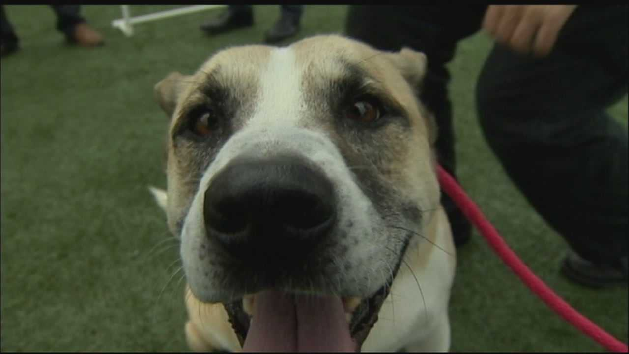 SPCA dogs to get DNA tests to determine breed