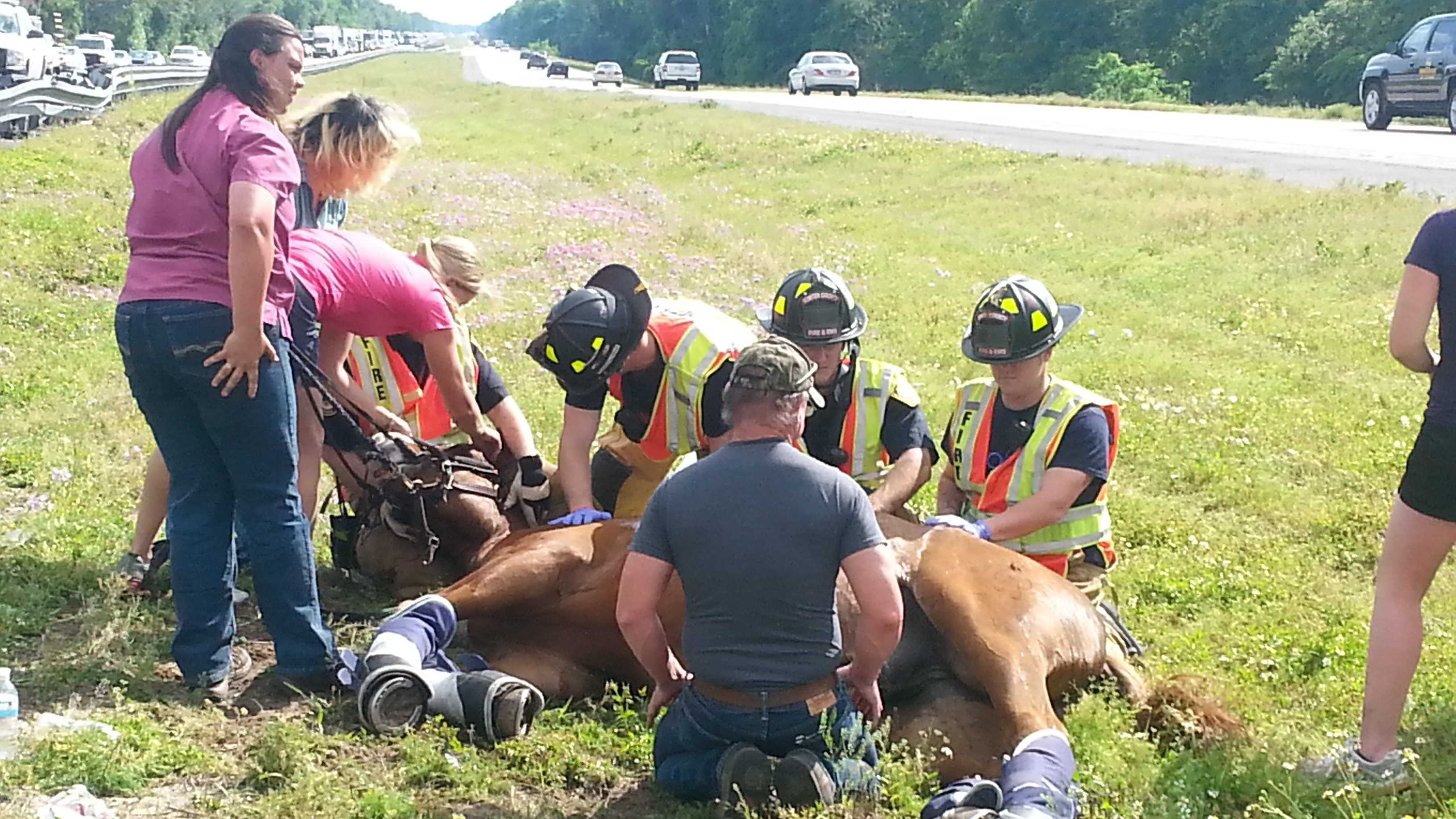 Horse ejection(1)