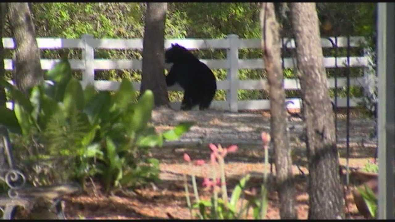 A state lawmaker is saying he wants extra precautions and a change to the laws after a woman was attacked by a bear in a Seminole County neighborhood.