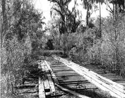 Abandoned road and bridge in Central Florida. (1955)